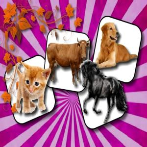 Domestic Animal Memory Challenge